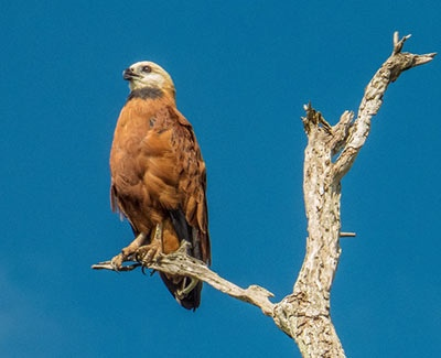Crooked Tree Wildlife Sanctuary Birding Tour