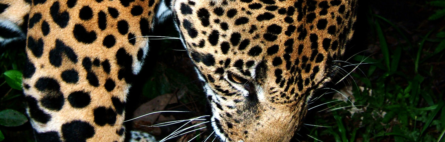 The Belize Zoo Tour with Maya Walk Tours